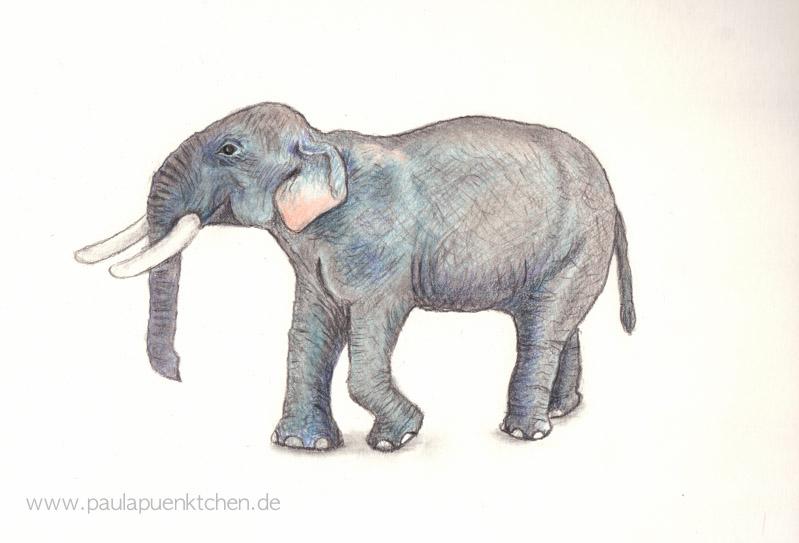 Buntstiftzeichnung Elefant